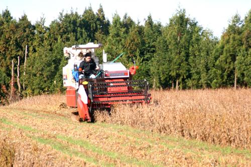 2010年12月 山是清での有機大豆収穫