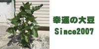 Since2007 金沢大地の幸運の大豆